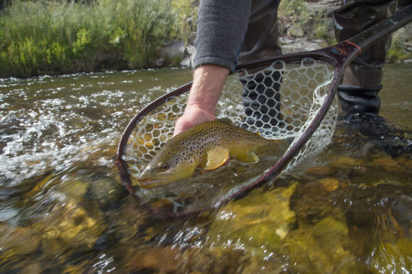 Great Catch at the Gunnison Gorge - Walk Wading with Matt McCannel